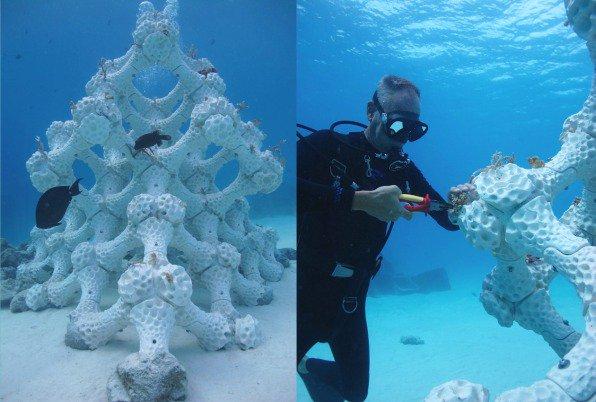 3 coral regeneration 1
