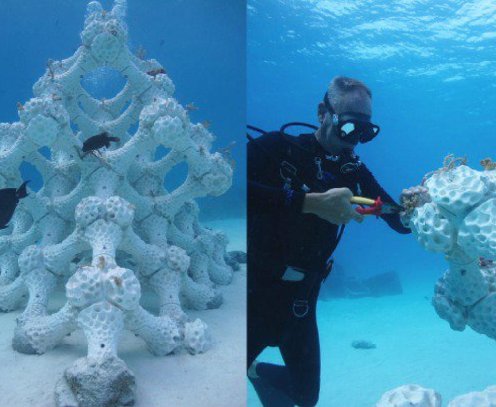 3dclay coralli