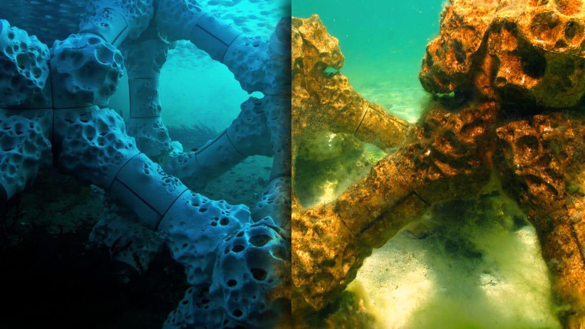 p 1 90240605 coral regeneration